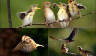 Lý giải giấc mơ về chim trong xo so mien bac